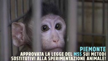 """SPERIMENTAZIONE ANIMALE, FREDIANI (M5S): """"INGRESSO DEL POLITECNICO IN 3R E' UNA BUONA NOTIZIA. ORA SI FINANZI LA LEGGE REGIONALE PER PROMUOVERE LA SPERIMENTAZIONE ALTERNATIVA"""""""