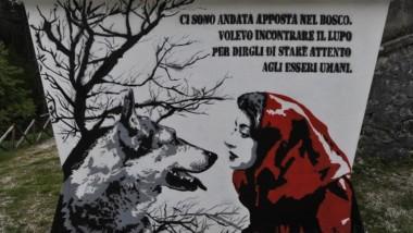 """Disabato, Bertola (M5S): """"Cappuccetto Rosso, il lupo e Carosso il cacciatore. Dal 1800 non risultano attacchi alle persone"""""""