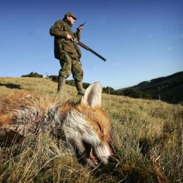 Bertola, Disabato (M5S): Per Cirio e la Lega  caccia prioritaria anche durante l'emergenza Sanitaria. Inconcepibile pensare alle doppiette mentre il Piemonte collassa sotto i colpi della pandemia