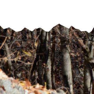 """Disabato – Azzarà (M5S): """"Inaccettabili dichiarazioni del presidente Parco Alpi Cozie Deidier, un'offesa nei confronti di operatori del Progetto Life e degli enti parco. Carosso riferisca in commissione ed alla comunità del parco"""""""